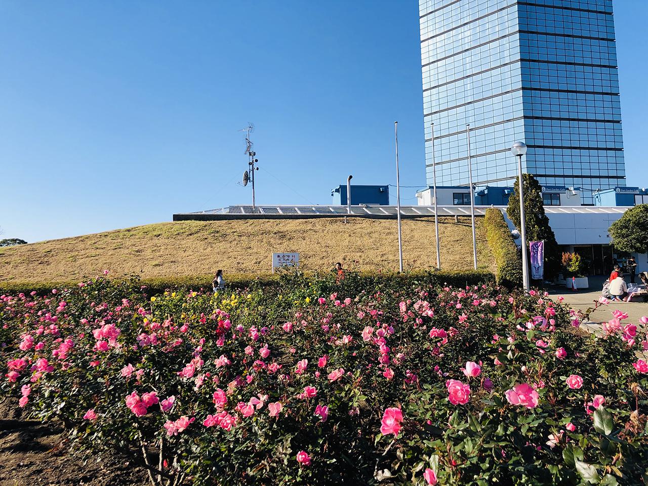 植えられたたくさんの花の写真