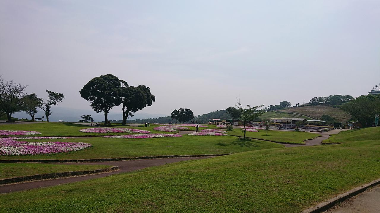 まきばの広場の美しい花畑の写真