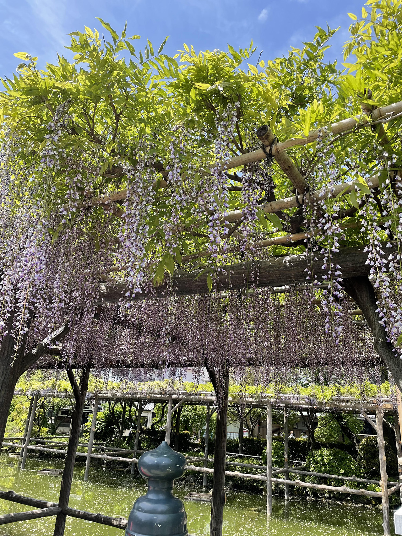 亀戸天神社の投稿写真5