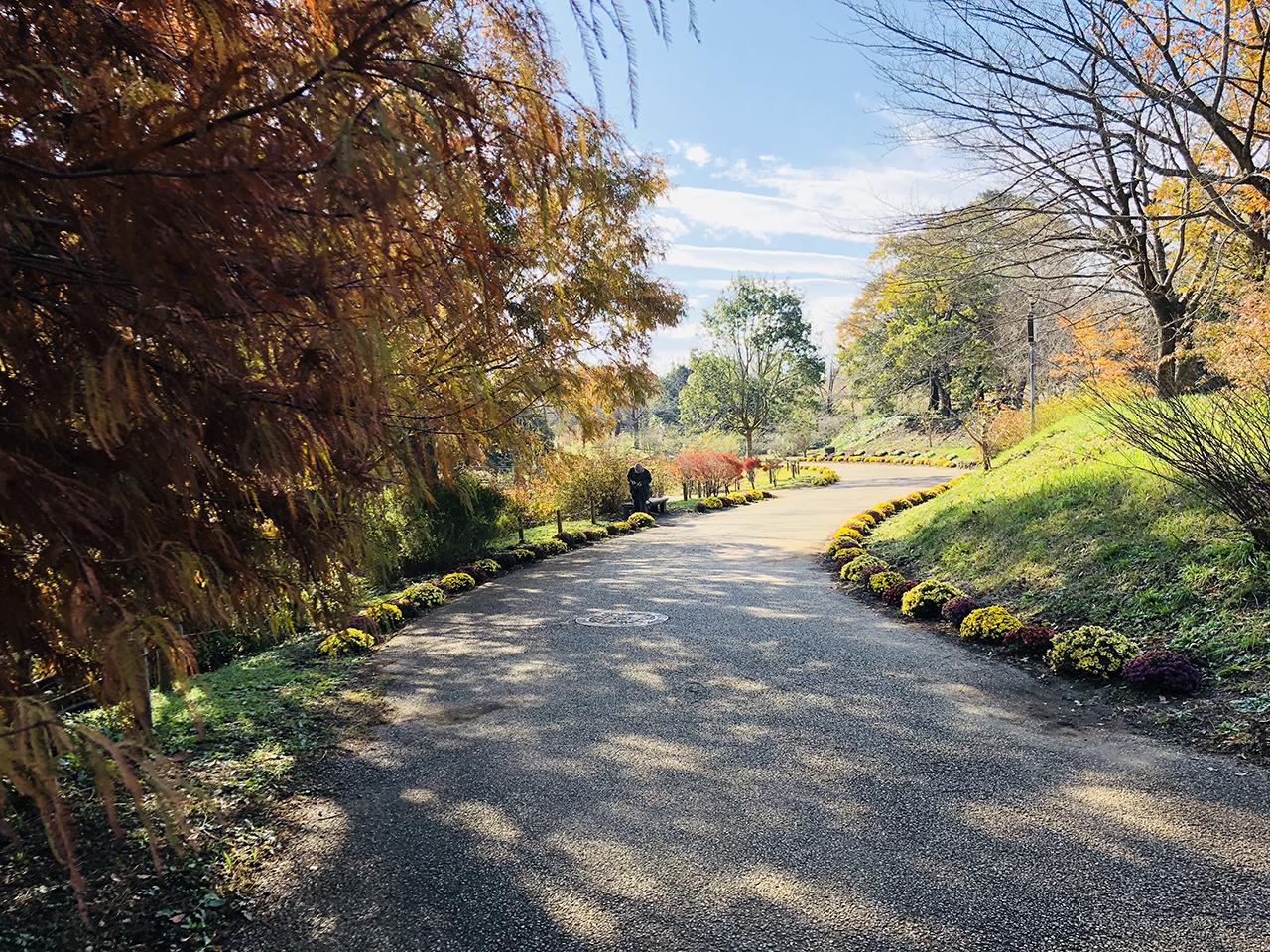 池のそばにある緑道の写真