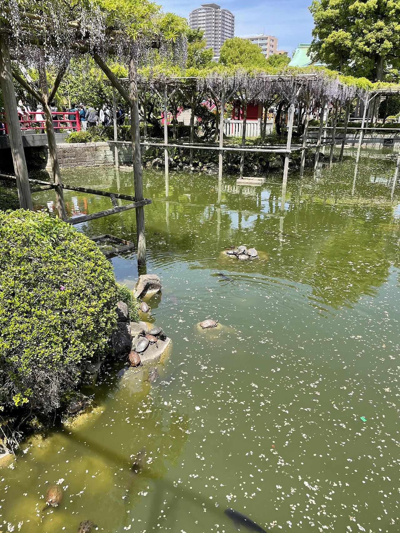 亀戸天神社の投稿写真6