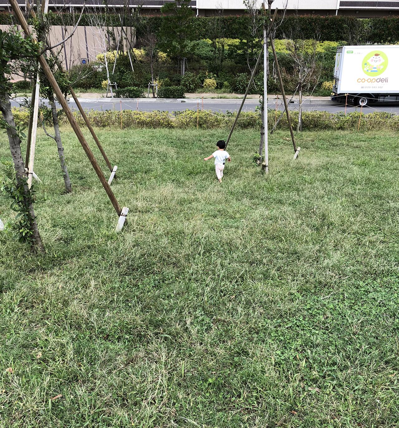 芝生の写真2