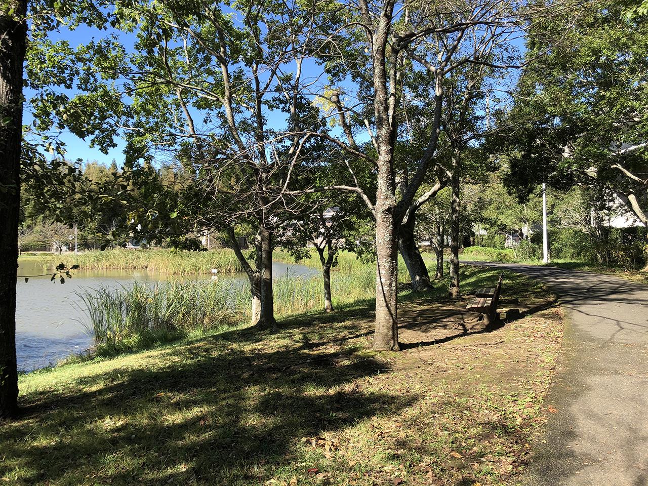 池の周りの風景写真