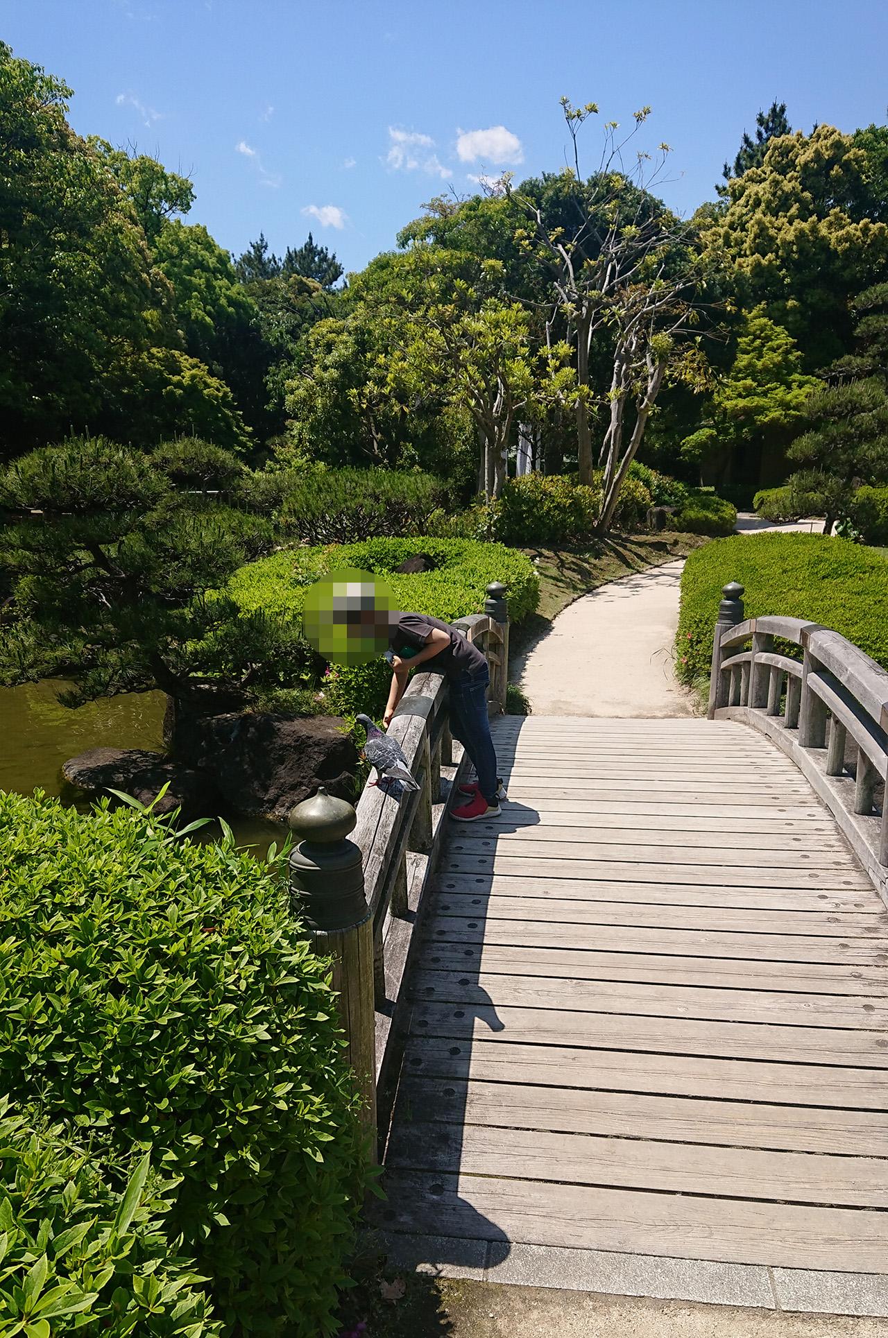 橋の上から鯉にエサをあげる写真