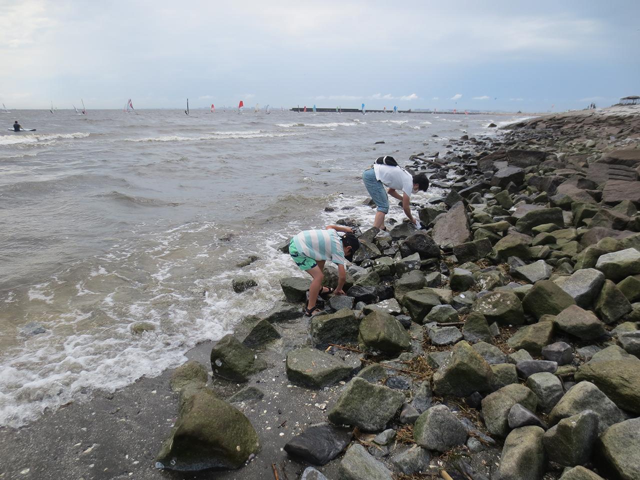 岩場でカニや魚を見つけている写真