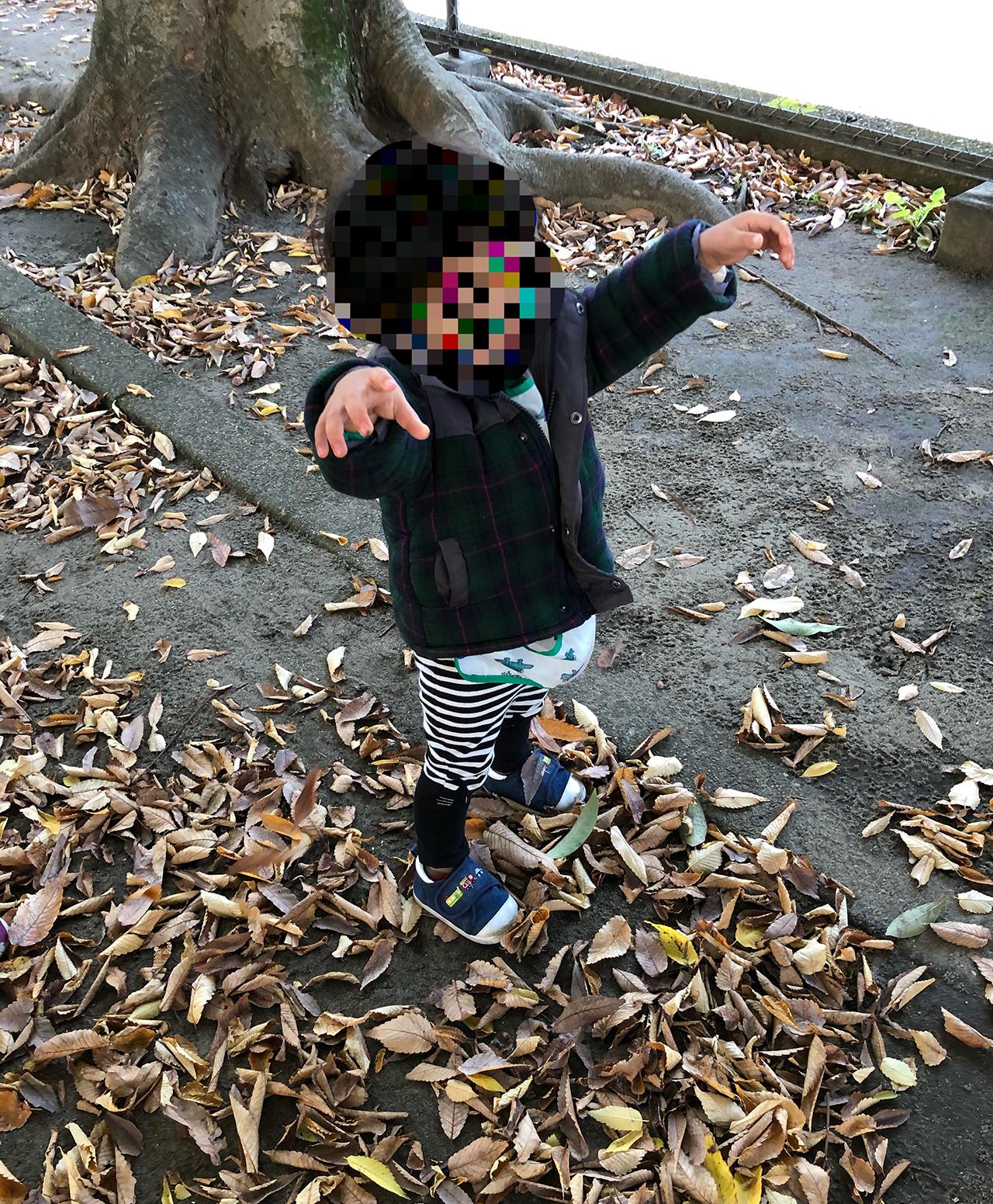 落ち葉遊びの写真