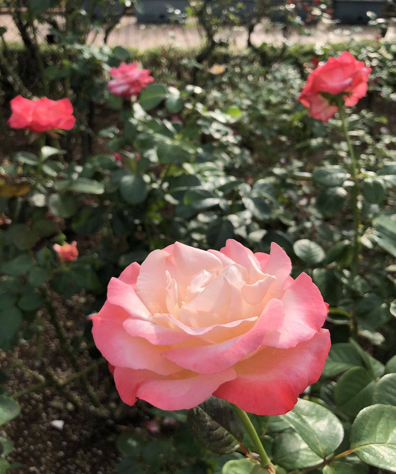 ブルーの香りの写真2