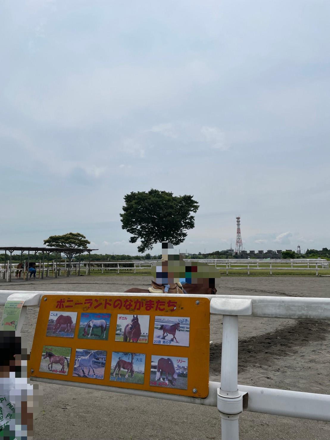 ポニーに乗馬している子どもの写真