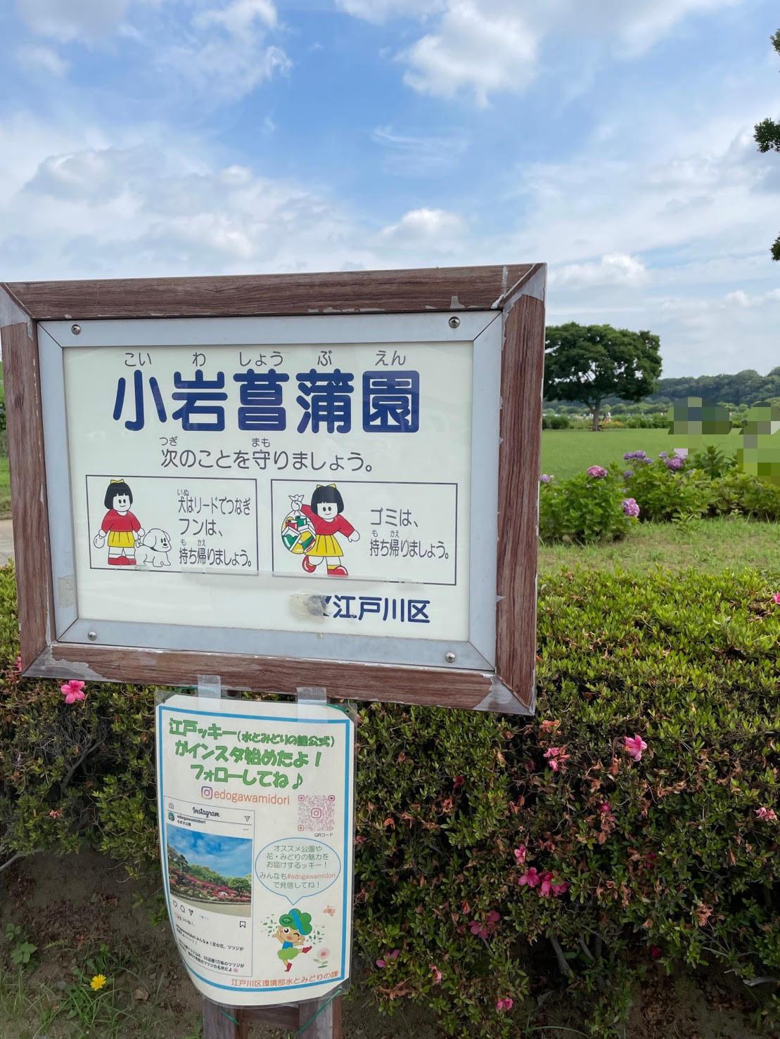 小岩菖蒲園の画像
