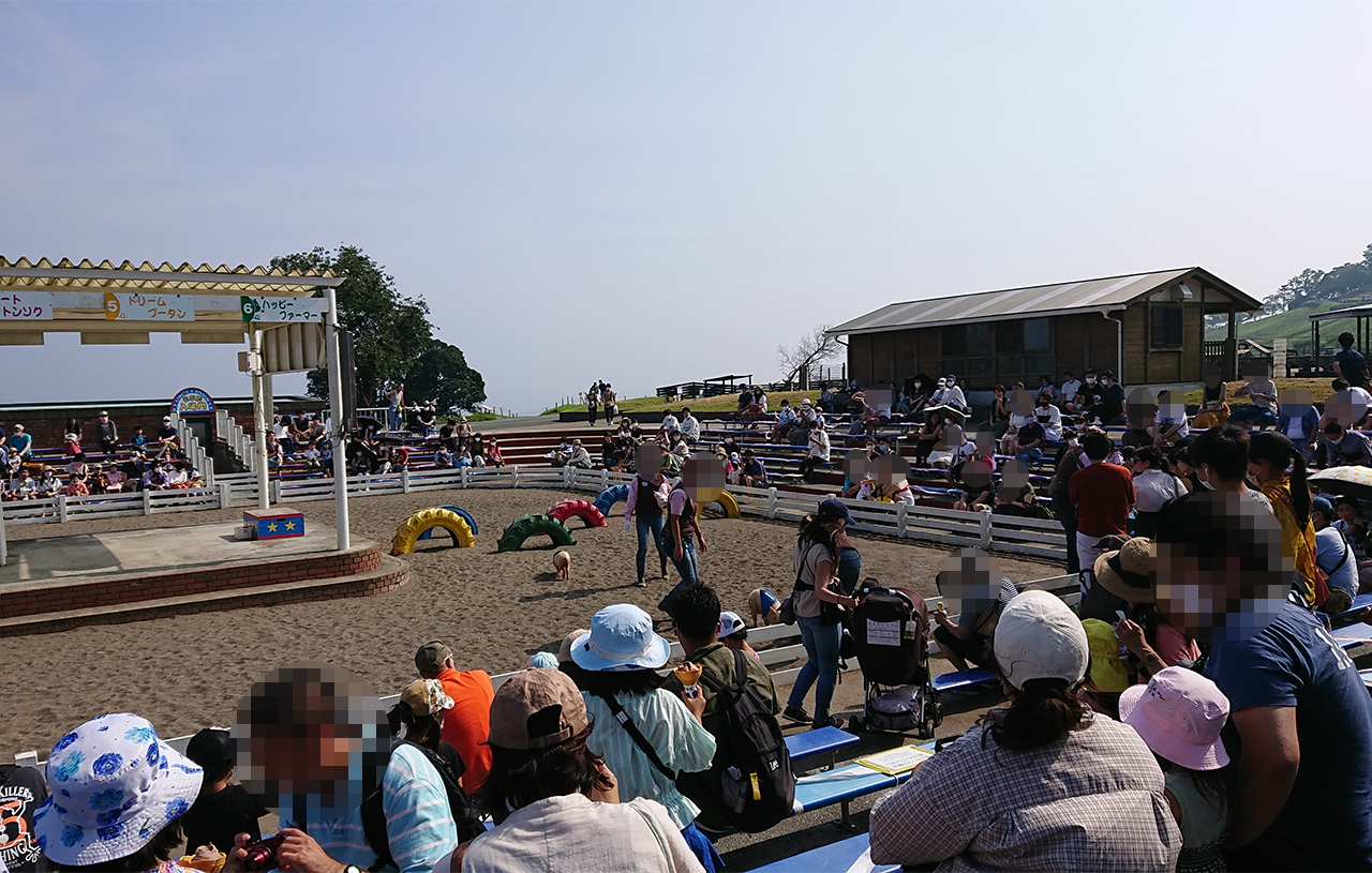 レースに参加するこぶたたちが紹介されている写真