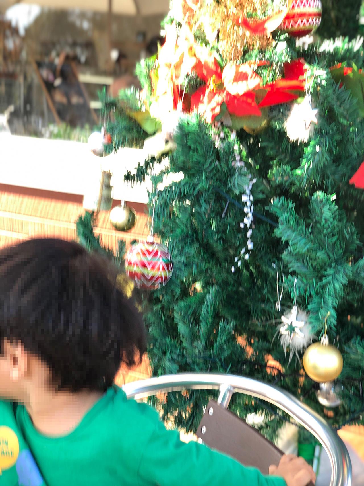 クリスマスツリーの写真