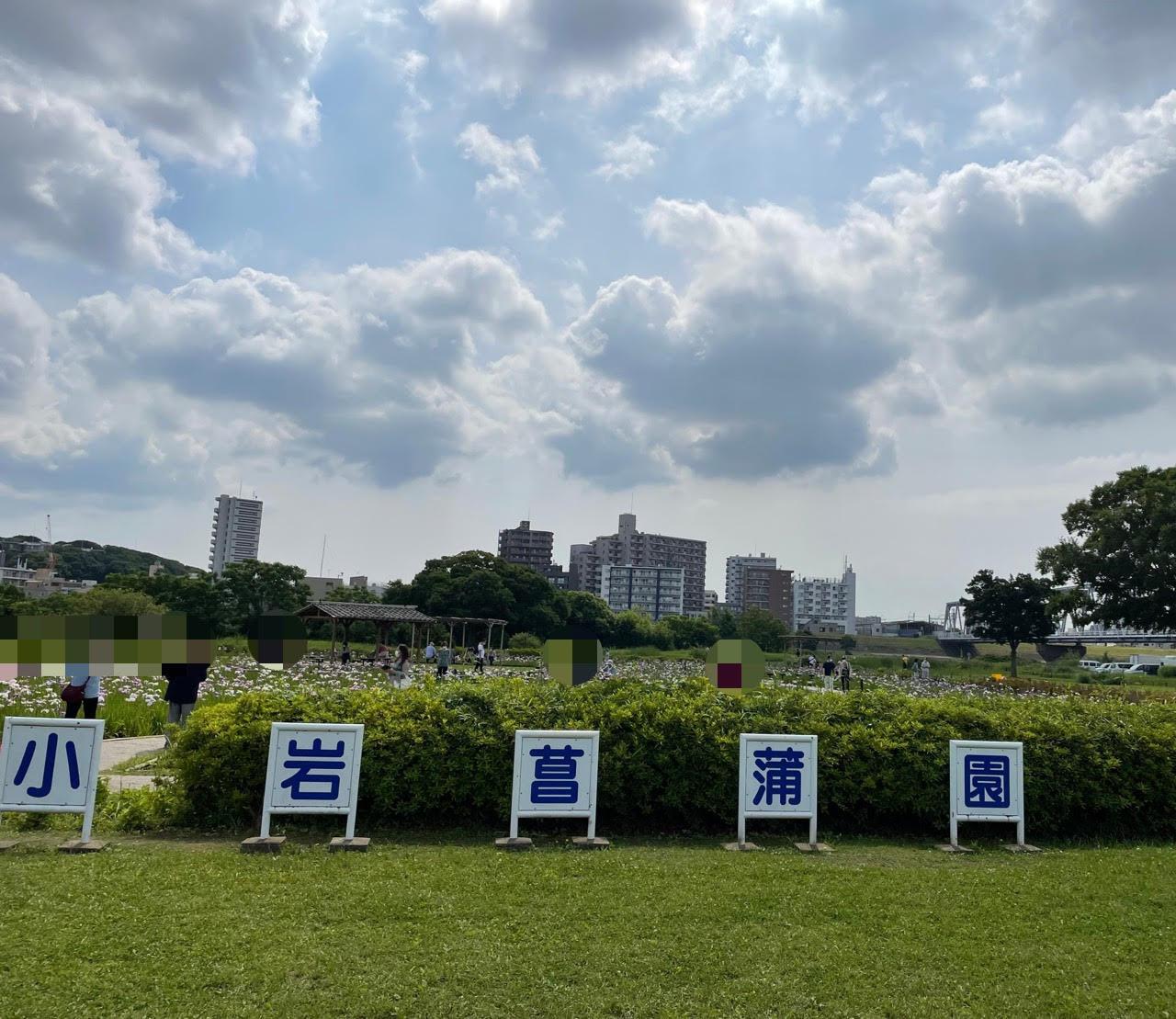 小岩菖蒲園の写真