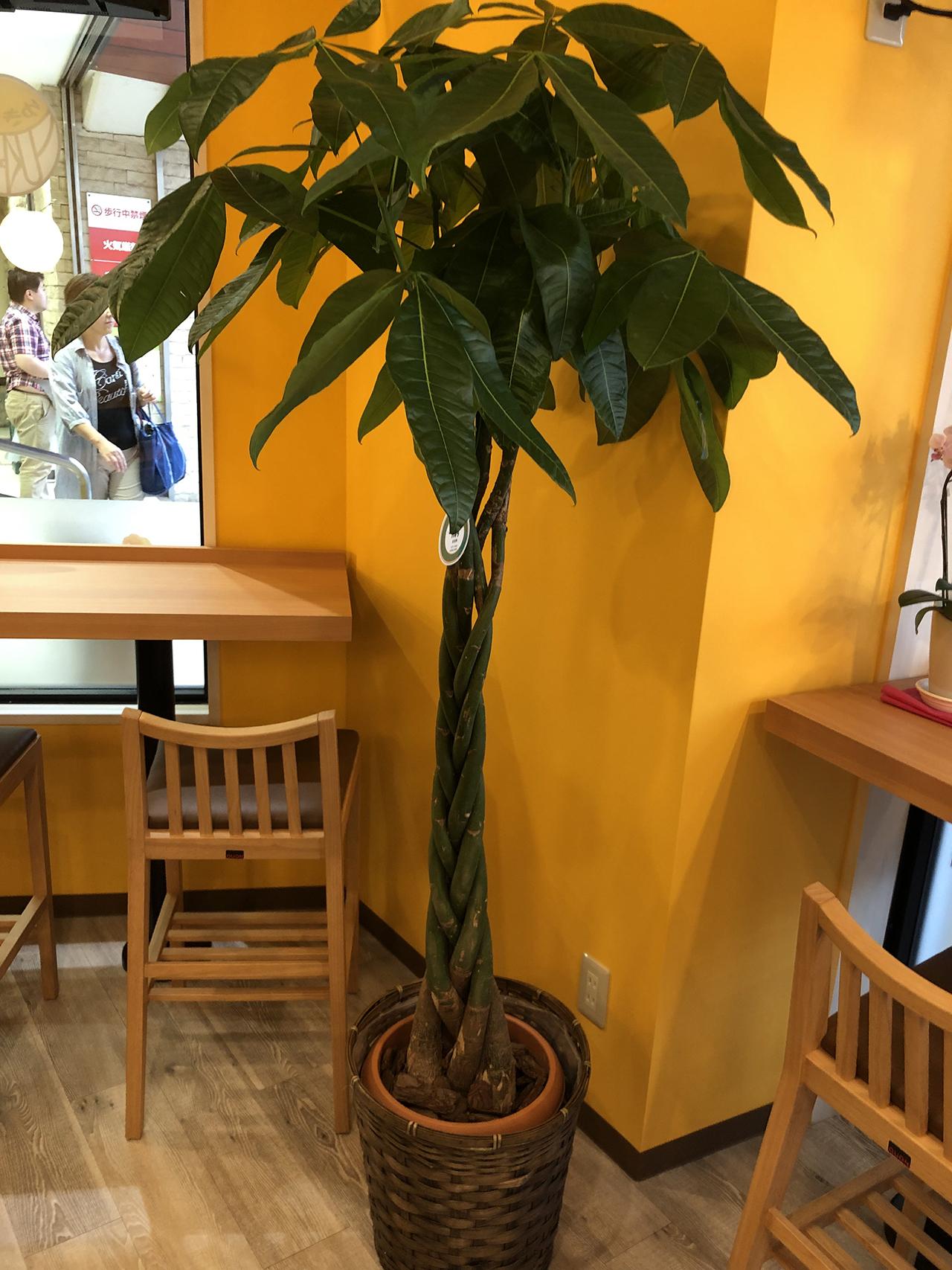 店内の観葉植物の写真