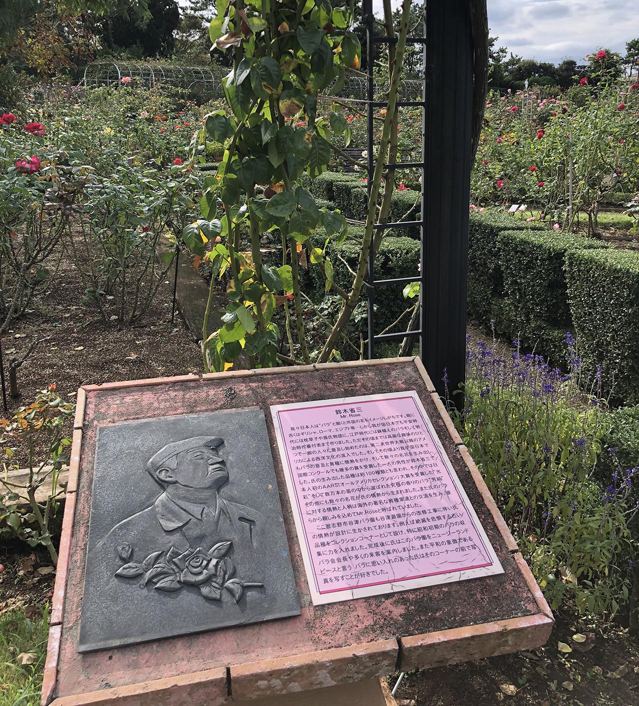 バラの解説の写真