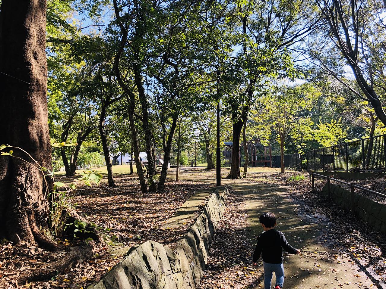 公園内の木々の写真