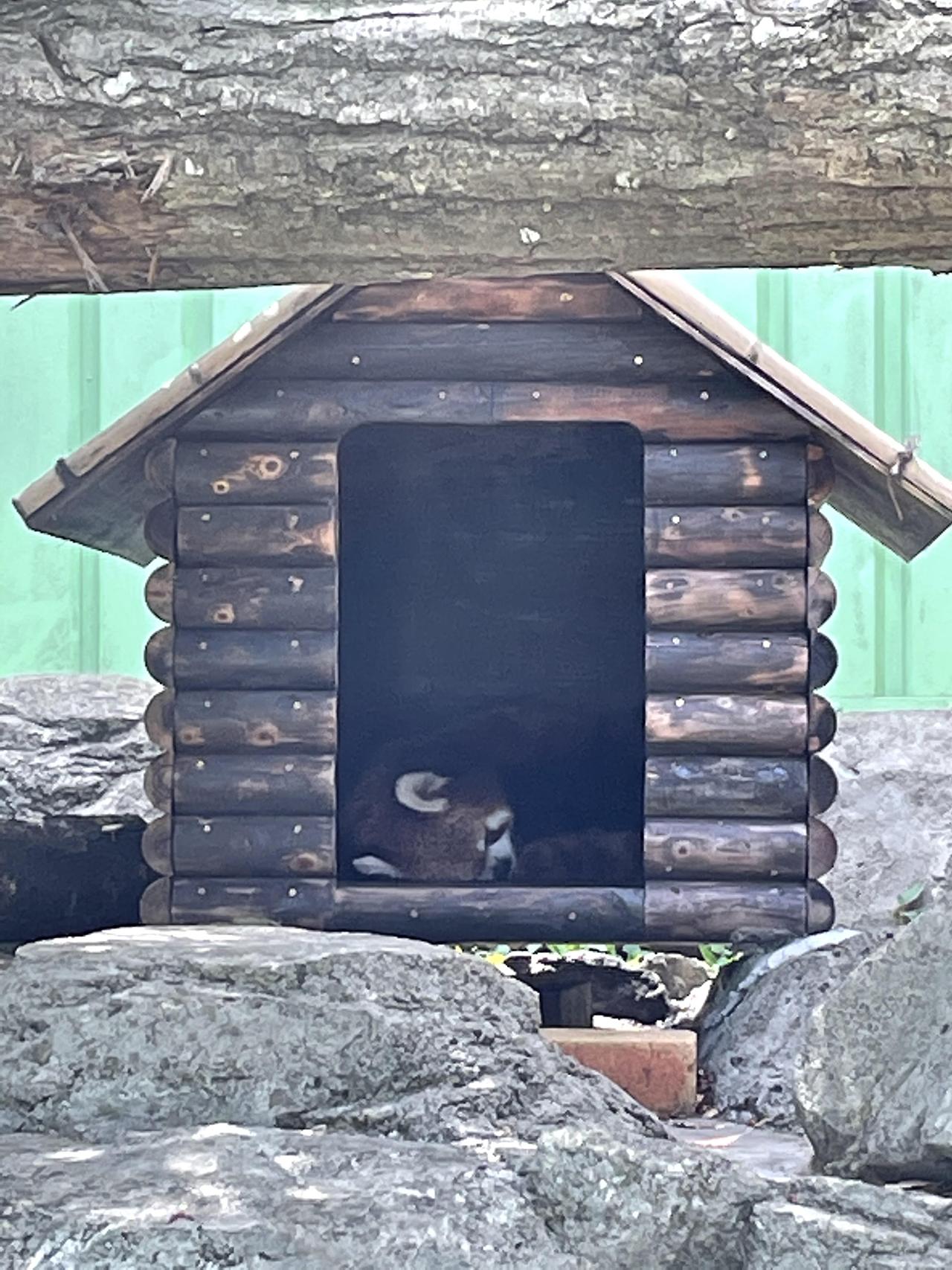 レッサーパンダの小屋の写真