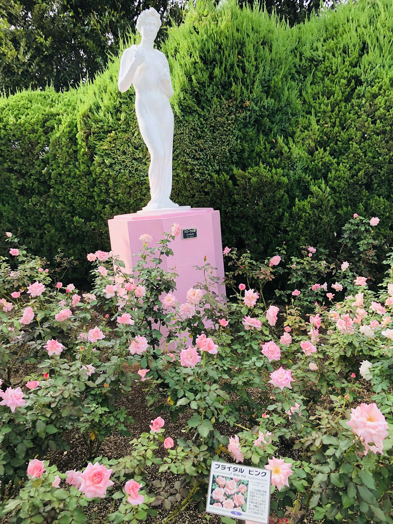 バラの写真5