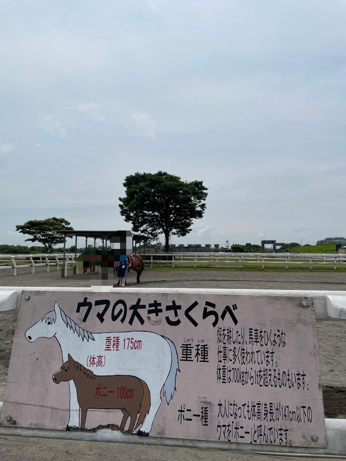 馬とポニーの比較についての案内看板写真