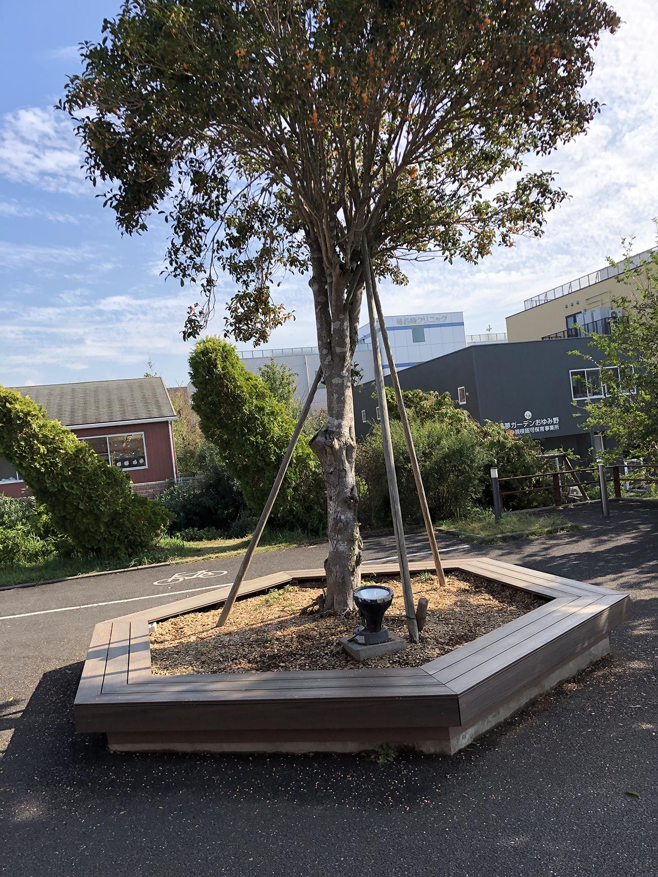 外に植えられた大きな木の写真