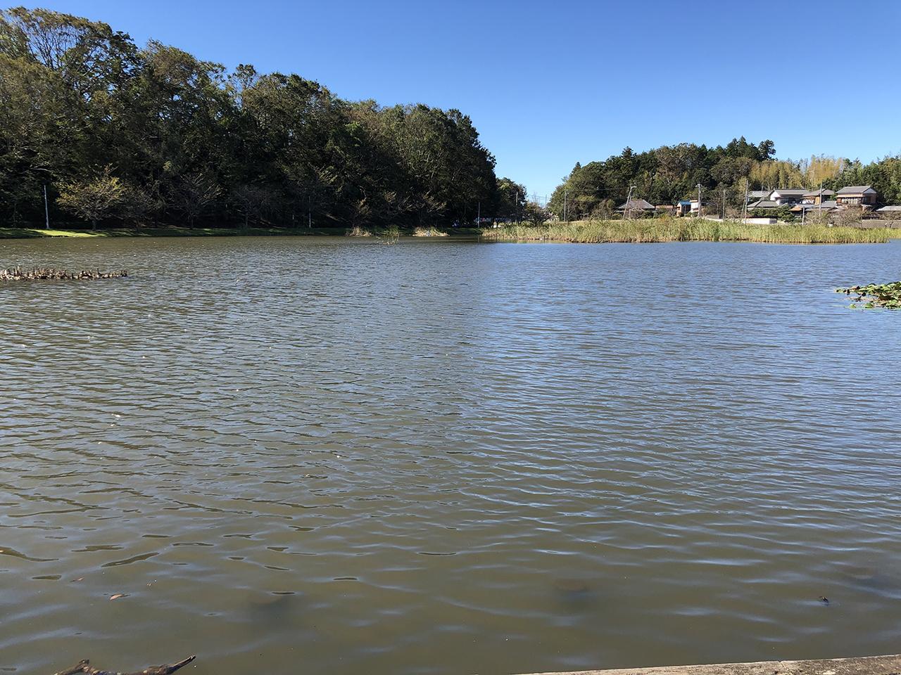 大百池の写真