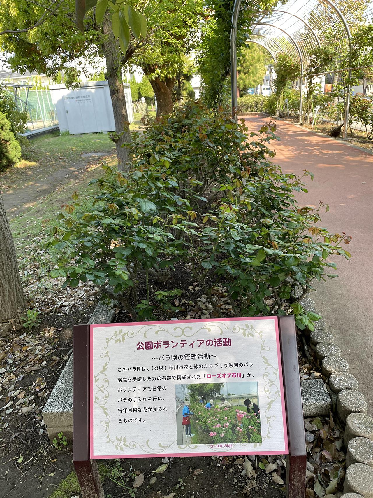 バラ園の写真