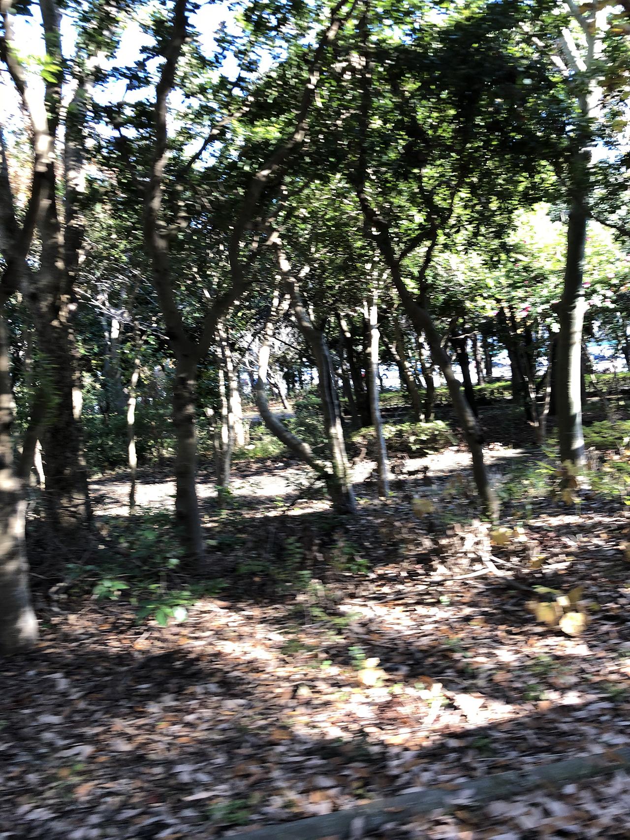 公園の周りの木々の写真