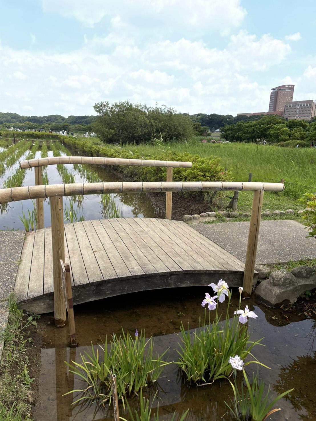 小岩菖蒲園の園内の写真2