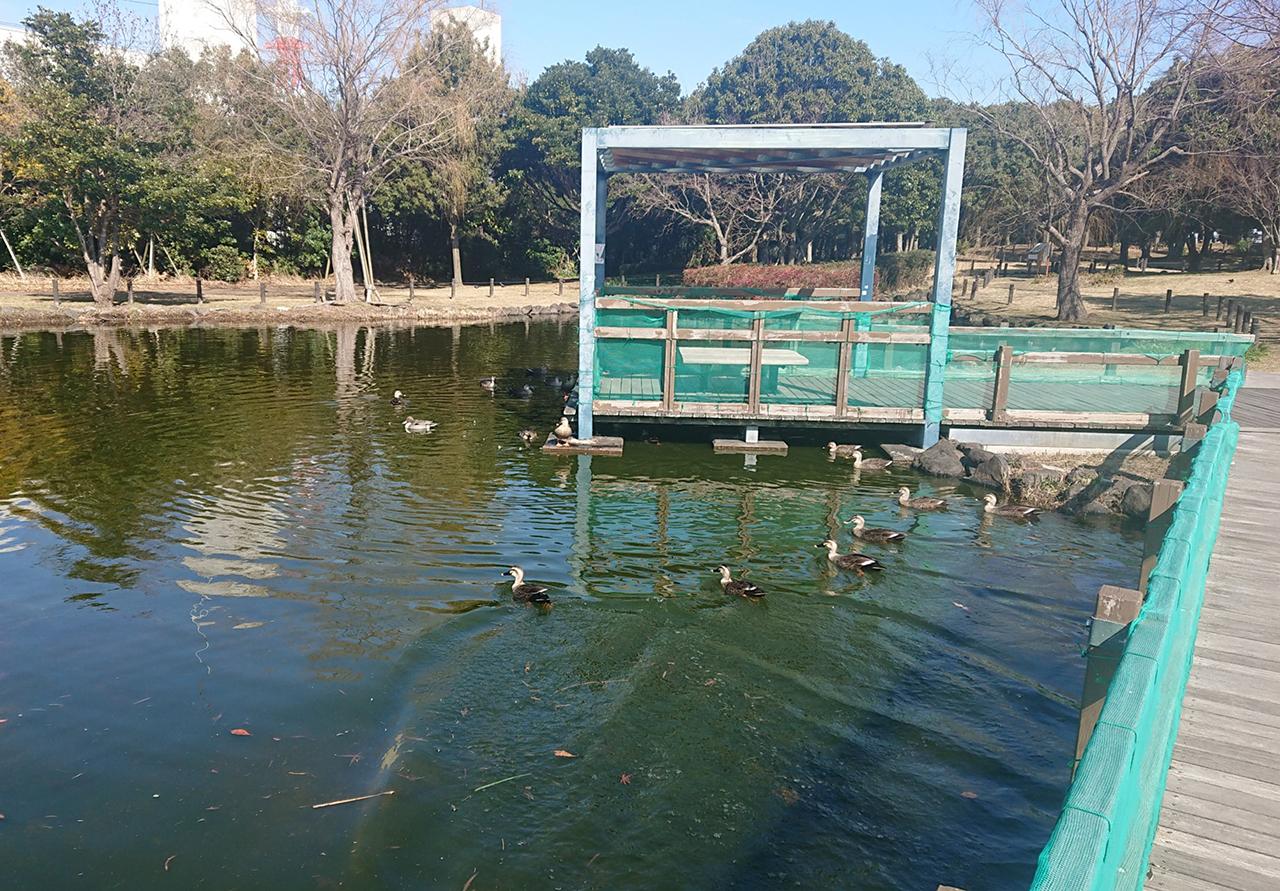 池の写真3