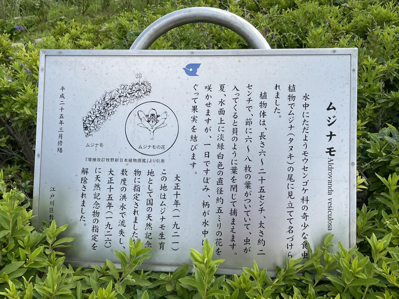 ムジナモの案内看板の写真