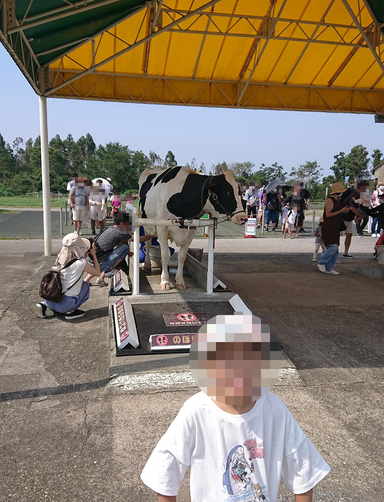 乳牛と一緒に写っている写真