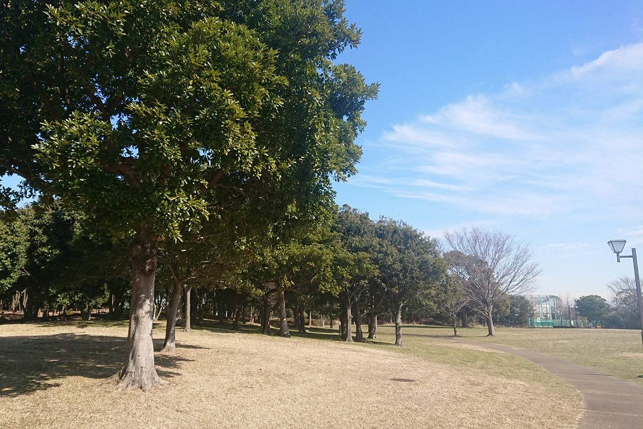 広場の大きな木の写真